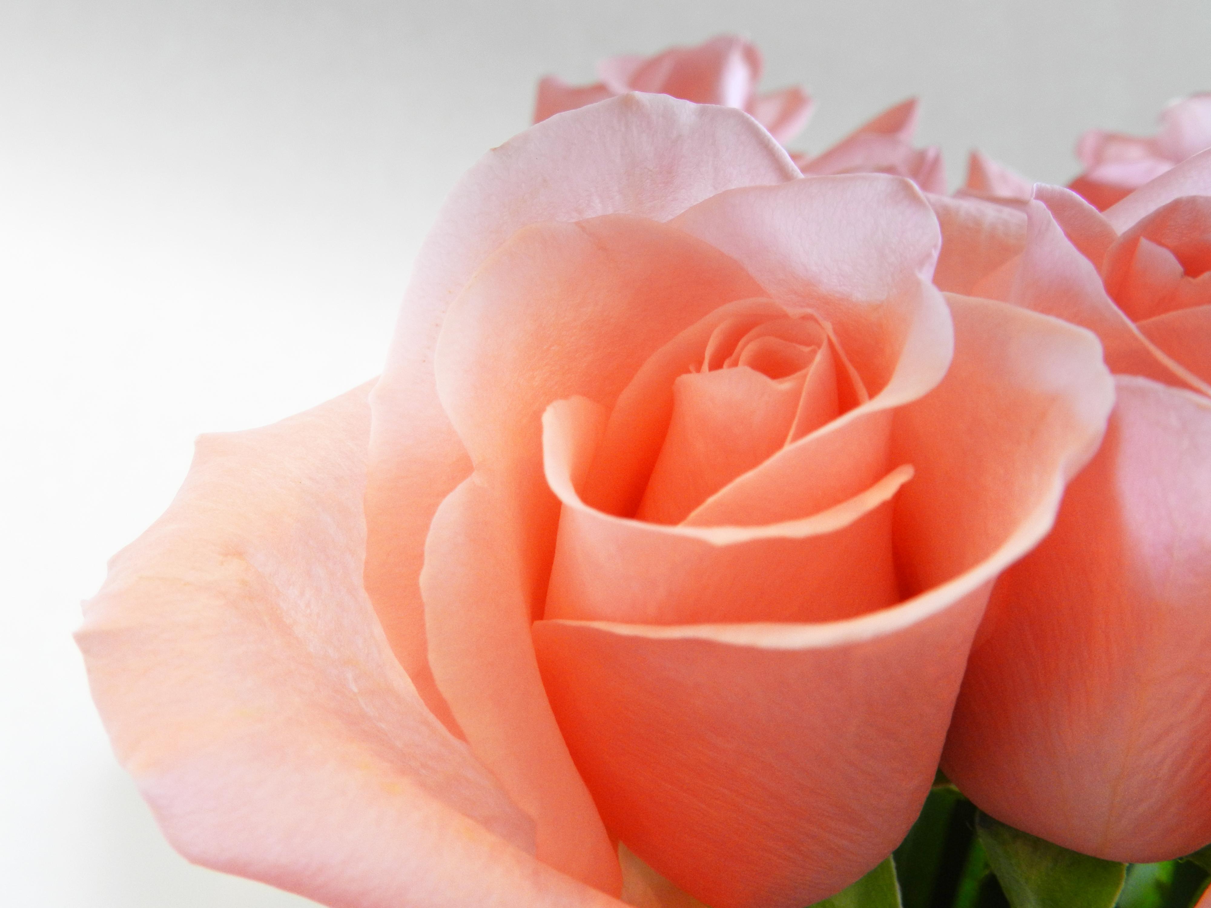 A arte de amar e a sabedoria do desapego